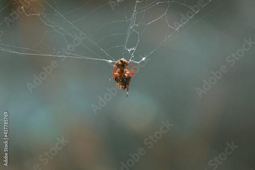 Insecte au Costa Ria Fototapeta