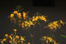 Beautiful Flowers In A Garden.