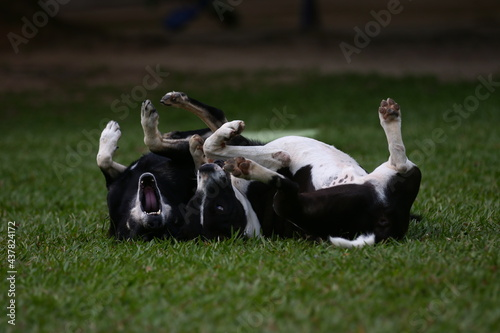 Carta da parati Cães