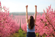 Happy Woman Raising Arms In A Pink Flowered Field
