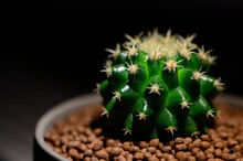 Close-up Golden Barrel Cactus In Pottery Grey Pot On Dark Background. Thorns House Plant In Room. Dark Tone