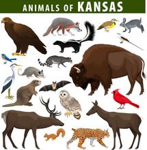 Vector Set - Animals Of  Kansas: Eagle, Fox, Rabbit, Deer, Bison, Meadowlark, Flycatcher,  Skunk, Bat, Racoon, Bobcat, Beaver, Squirrel, Opossum, Heron, Barred Owl And Northern Cardinal