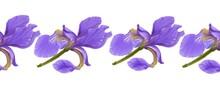 Lilac Irises On A White Background Close-up, Seamless Pattern, Border