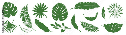 Valokuva Set of Tropical leaves