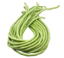 Yardlong Beans Isolated On White Background