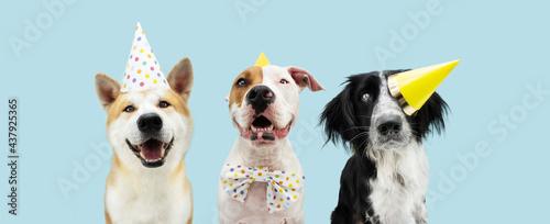 Obraz na plátně Banner Birthday party dog
