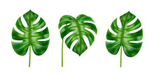 Exotic Foliage Of Plants, Houseplant In Tropical Style. Isolated Leaves Set In Different Positions. Summer And Spring Botany Of Jungles And Subtropical Climate Forests. Realistic 3d Cartoon Vector