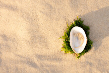Striped Sea Horse Is On Shell Conch On Sand On Beach At Sunrise. Natural Seashell. Traveling And Feeling Lonely, Cheering Up, Rest, Refresh And Relax. Vacation Mood Concept. Copy Space For Text.