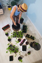 Gardening At Home. A Woman Is Pouring Soil Into Seedling Pots. She Grows Seedlings Of Flowers And Vegetables At Home.