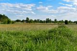 Fototapeta Na sufit - Zielone rośliny, łąka, pole  i błękitne niebo