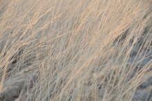 Vent Dans Les Herbes Hautes, Savane, Namibie, Afrique