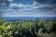 Swedish Forest Landcape Photo