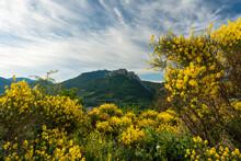 Vue Sur Le Rocher Saint Julien Avec Genets Au Premier Plan à Buis Les Baronnies Dans La Drôme Provençale