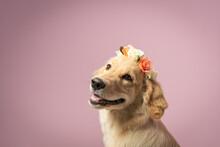 Fotografia De Caes Photo Pet Dog
