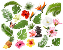 Big Collection Of Exotic And Tropical Leaves And Plant, Flowers And Fruit. Vector