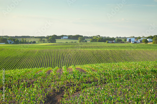 Field of young corn and farms on rolling hills at sunset in central Minnesota #438030362