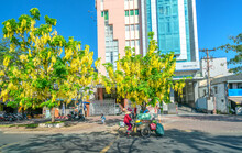 Busy Traffic At Boulevard With Cassia Fistula Flower Tree Blooms Planted Along Roadside Adorns City Growing Urban Landscape Ho Chi Minh City, Vietnam