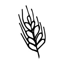 Vector Illustration Of A Spikelet Of Wheat In Doodle Style
