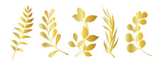 Set Of Beautiful Gold Leaves Plants, Leaves, Plant Design. Vector Illustration .