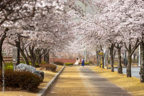 Foto 벚꽃이 만발한 거리를 걷고있는 소녀들