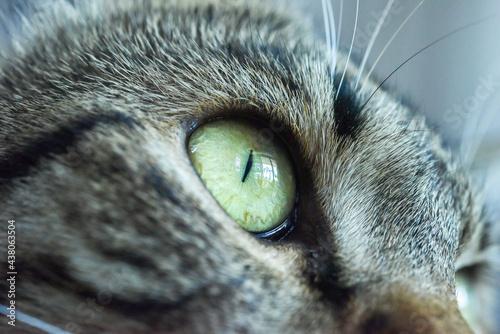 Obraz na płótnie Close up of gray female cat's eye