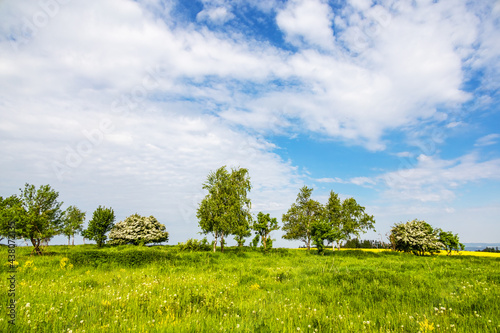 Landscape with green meadow, trees and blue sky #438072135