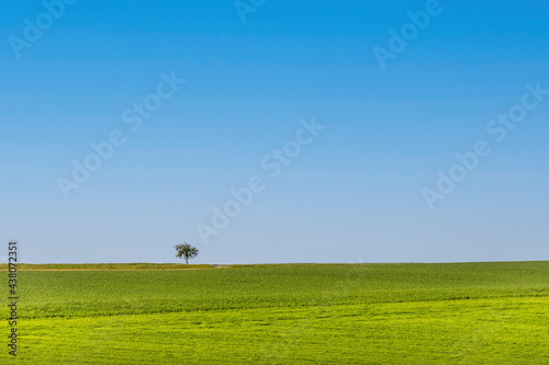 Landscape with green meadow and solitaire tree on horizon #438072351