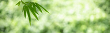 Closeup Of Beautiful Nature View Green Bamboo Leaf On Blurred Greenery Background In Garden With Copy Space Using As Background Cover Page Concept.