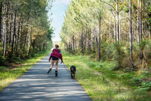Pretty Young Woman Walking Her Dog Rollerblading On A Bicycle Lane