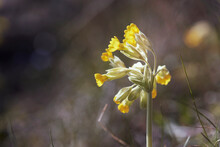 Close-up Of Yellow Wildflower
