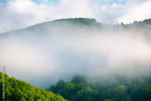 fog on the hill in the morning. beautiful nature background in summer. scenic outdoor scenery on a sunny weather #438108900