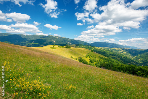 grassy meadow in mountains. wonderful nature landscape. sunny summer day. clouds on the sky #438108949
