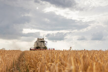 Combine Harvester Working On A Wheat Field. Harvesting Wheat.