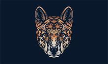 Dingo On Black Background