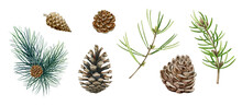 Pine Branch, Cone Set. Watercolor Illustration. Hand Drawn Evergreen Pine Tree Elements. Spruce Branches, Cone And Needle Fir Tree Collection. Traditional Festive Decor Objects On White Background