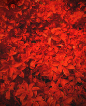 Background With Artificial Fiery Flowers