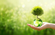 Earth Day Or World Environment Day, Environmentally Friendly Concept. Save Our Planet, Restore And Protect Green Nature, Sustainable Lifestyle And Climate Literacy Theme. Tree Grows On Globe In Hand.