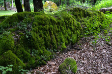 The Image Of A Dark Green Forest. Subtropical Forest. Green Leaves, Large Moss, Stones Covered With Moss, Tree Stumps, Waterfall In The Forest.