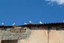 White Doves On The Roof Of An Old Building