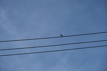 Small Bird On Wires Against The Blue Sky