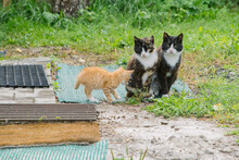 Three Cats In The Yard During The Daytime