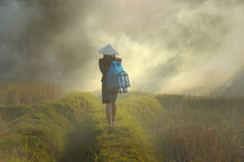 Rear View Of A Woman Walking Through A Paddy Field In Mist, Thailand