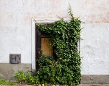 Old Abandoned Door Entrance With Bindweed Around
