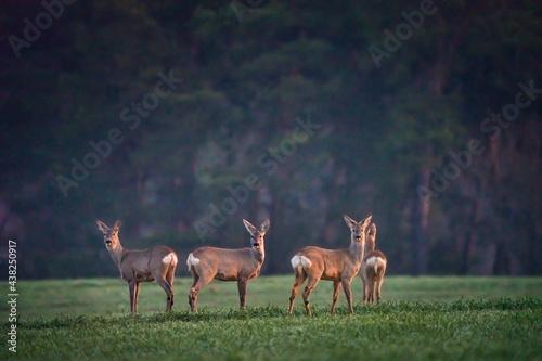 Canvas Deers in the Woods