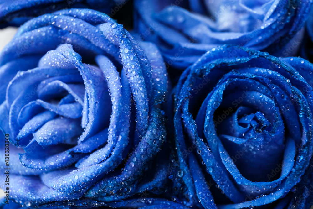 Leinwandbild Motiv - Pixel-Shot : Beautiful blue roses as background, closeup