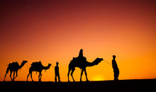 Indian Men Walking Through The Desert With Their Camels