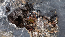 Closeup Of A Decayed Hole In A Tree Trunk, With Small Twigs, Leaves And Stones Scattered On The Surface.