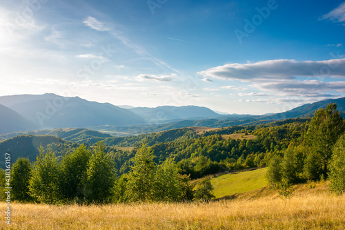 rural landscape in mountains at sunset. trees and fields on grassy rolling hills. beautiful countryside scenery of transcarpathia region, ukraine, in evening light. wonderful sunny weather in autumn #438363157