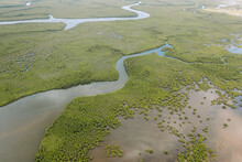 Distant Wavy River At Flooded Forest Area