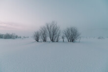 Bushes Between Field In Snow And Amazing Sky